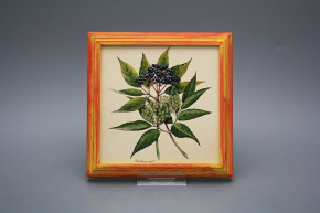 Bild 18cm Herbs kCMB